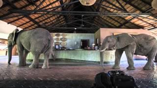 Elephants of Mfuwe Lodge