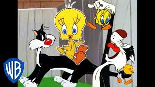 Looney Tunes   I Taut I Taw a Putty Tat!   Classic Cartoon Compilation   WB Kids