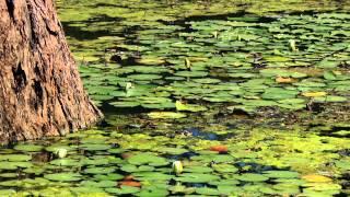 Benefits of Wetlands