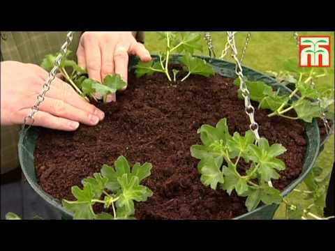 How to plant up an Eezee™ hanging basket video with Thompson & Morgan.