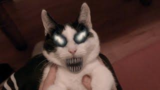 VENOM CAT - Face changing (Test Effect)