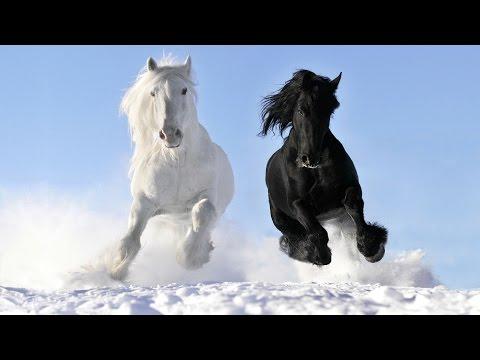 RTU Christmas Randomness: The Horse Song
