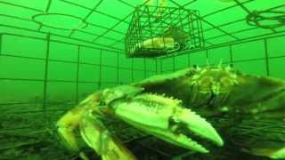 Never before seen underwater  footage of a Crab Trap at 80ft with a GoPro