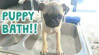 CUTEST PUPPY BATH EVER!!