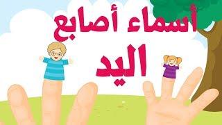 أغنية تعليم اللغة العربية للأطفال أسماء الأصابع - Famille des doigts arabe - Arab finger family song