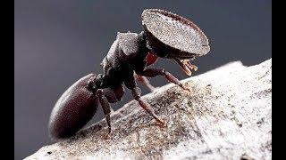 هل تعلم لماذا اذا ماتت ملكت النمل يموت كل النمل