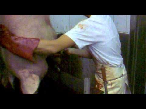 SLAUGHTERHOUSE slaughtering pigs knife stabbing woman operating