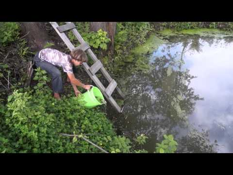пруд с карасями видео