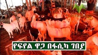 Ethiopia:የፍየል ዋጋ በፋሲካ ገበያ| Price Of Goat In Easter Holiday