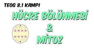 Hücre Bölünmesi ve Mitoz | 8.1 Kampı