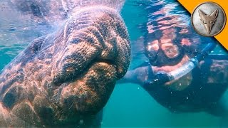 Swimming with Giants!
