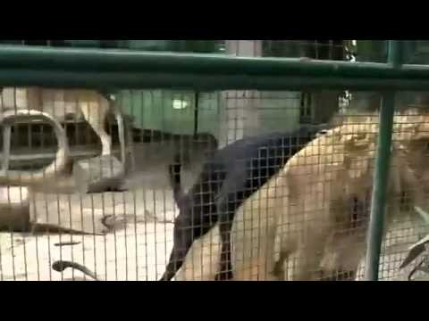 Xxx Mp4 Animal Sex Dog And Lion Funny Sex In Park Video 3gp Sex