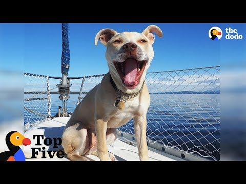 Xxx Mp4 Pit Bull Dog Lives On Sailboat With Her Cat Other Animals With Interesting Lives The Dodo Top 5 3gp Sex
