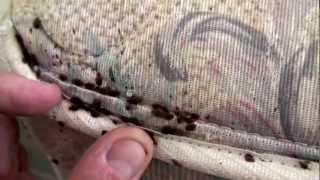 Dezinsectie plosnite, cum scap de plosnite, insecticide si otrava