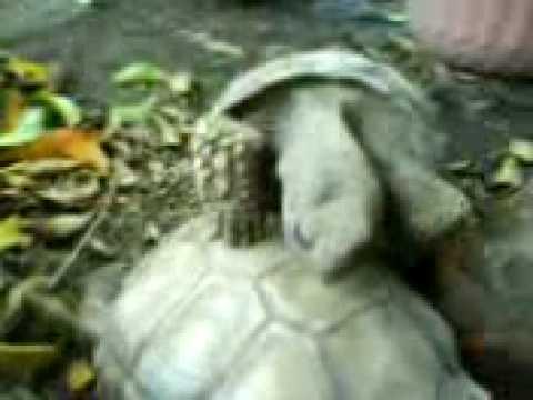 Tortugas xxx