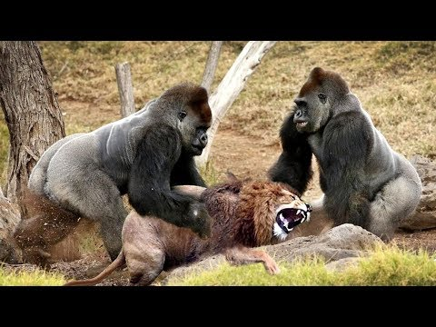 LIVE Discovery Wild Animals Most Amazing Moments Of Wild Animal Fights Animal Documentary 201̣9