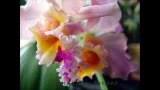 Yanni-Tribute