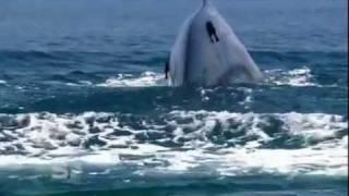 Blue Whales in Sri Lanka - Discover Sri Lanka