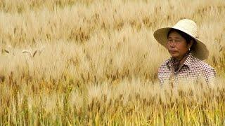 Stoopid Talk! Episode 9 - Asian BreakX50 - I Rice Farmer