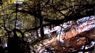 El3araby.net وثائقي - رحلة استكشافية في البراري الامريكية: مطاردة اسد الجبال