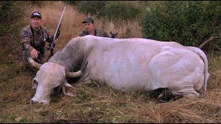 Caza del toro salvaje australiano