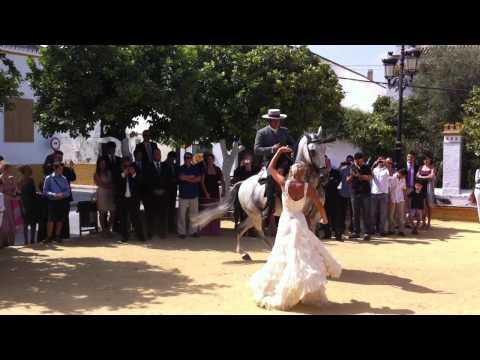 Baile Sorpresa por Sevillanas con un Caballo. Olé y Olé
