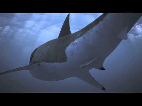 Xxx Mp4 Shark2 3gp Sex