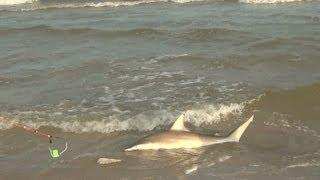 BlackTip Shark Fishing, What We Do For One Shark 3/4