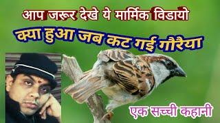 Gauraiya(House Sparrow) Jab Kat Gai -गौरैया की एक सच्ची कहानी