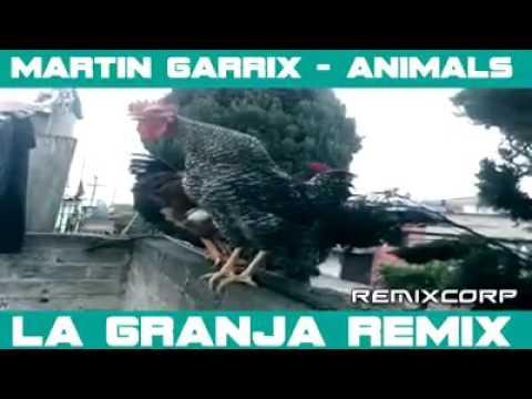 Martin Garrix - Animals (Chicken Version)