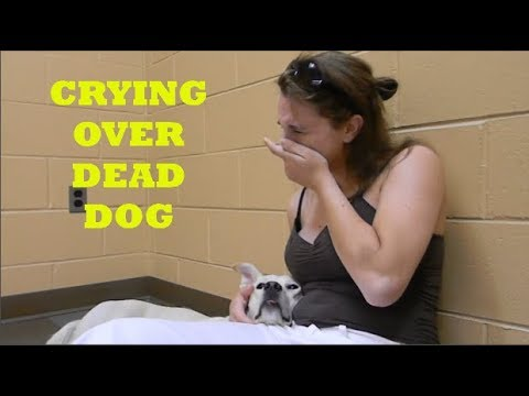 Xxx Mp4 Heartbreaking Moment Woman Crying Over Her Dead Dog 3gp Sex