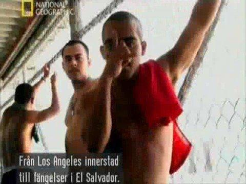 Mara Salvatrucha World s Most Dangerous Gang Part1