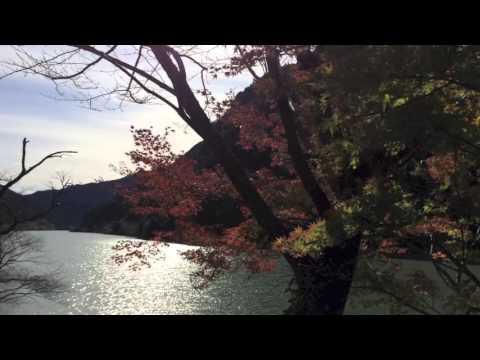 Autumn leaves  -Japanese maple leaves in the sun- Tatsuyama, Japan  [Nozomi Suzuki]