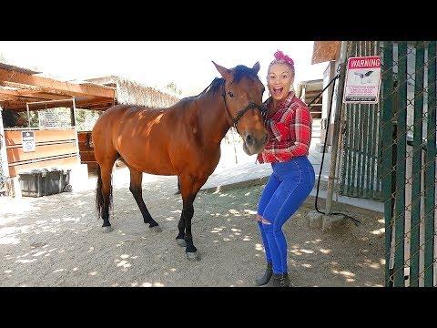 Xxx Mp4 SURPRISING GIRLFRIEND WITH A HORSE HER DREAM PET 3gp Sex
