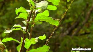 ☔ Rain In Forest | Meditation Nature Video | Sleep, Study, Relax, Write or Read to White Noise