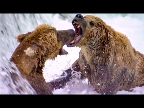 Top 5 Most Dangerous River Moments BBC Earth