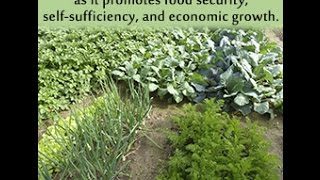 Difference Between the Monoculture and Polyculture Farming Techniques