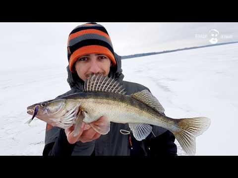 ловля судака на белоярском водохранилище