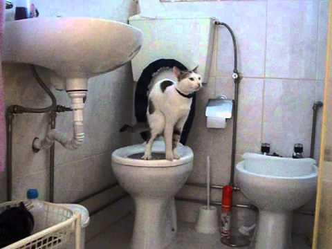 Gato Faz cócó na sanita