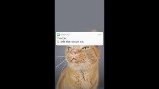 LAZY CAT | by txtstories