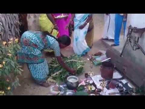 Xxx Mp4 Mattu Pongal Celebration My Native Vedavakkam 2016 3gp Sex