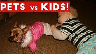Funniest Pets Vs Kids Video Compilation December 2016 | Funny Pet Videos