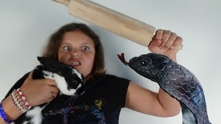 "Cobra Snake Attacks Bunny Rabbit ""Spatula Girl Saves The Day"" Victoria Annabelle"