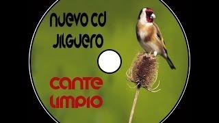 Cd Jilguero Cante Limpio