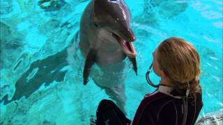 Super Smart Dolphin Answers Questions - Extraordinary Animals - Earth