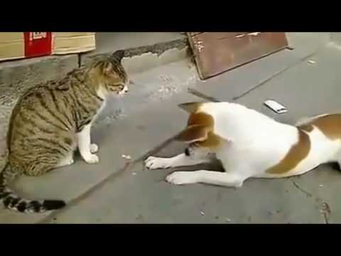 Angry Cats VS Dogs Funny Compilation 2017