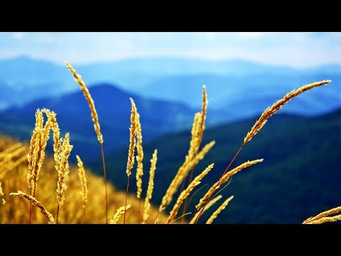 Morning Relax Music Background Music for Stress Relief Missouri