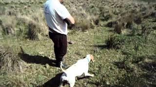 caça perdiz uruguai