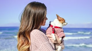 Top 10 Best Female Dog Names