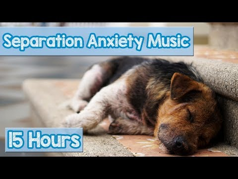 Xxx Mp4 15 HOURS Of Deep Separation Anxiety Music For Dog Relaxation Helped 4 Million Dogs Worldwide NEW 3gp Sex
